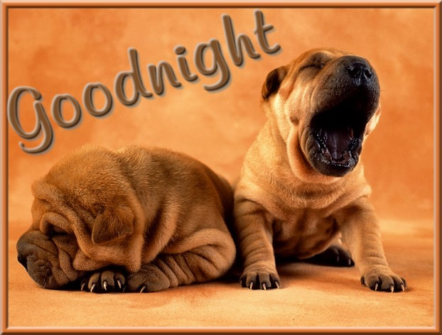 JT's World: Good Night!