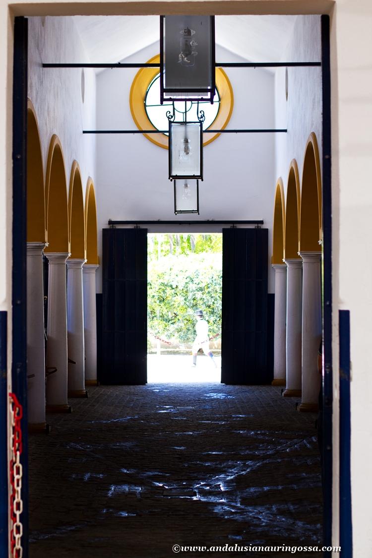 Andalusian kuninkaallinen hevoskoulu Jerez_Andalusian Royal Equestrian School Jerez_17
