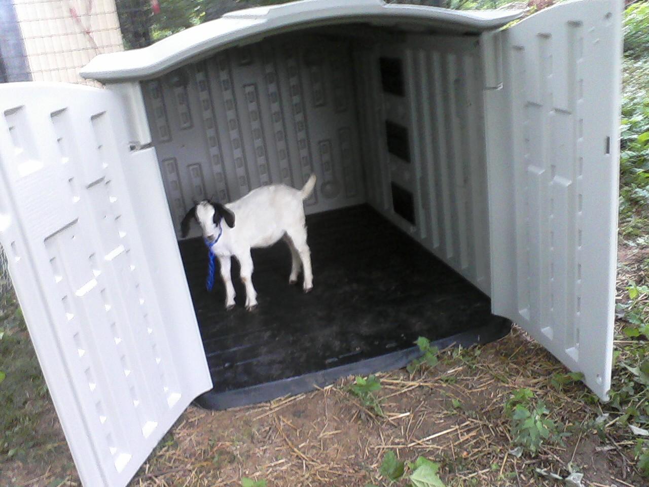 Goat shelter - photo#43