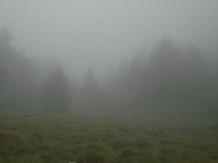 Bosc de Roures