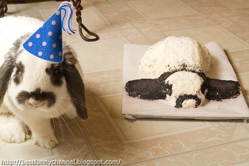 Funny bunny and cake.