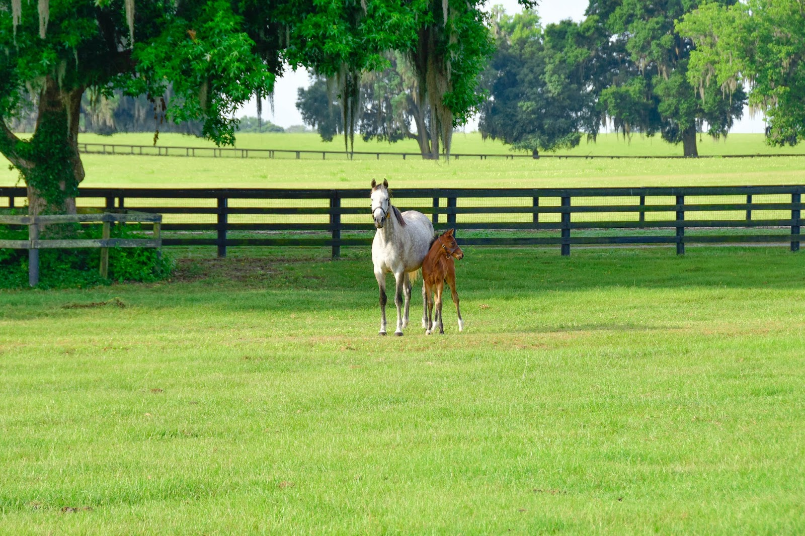 7 Tips for Buying the Right Horse Property