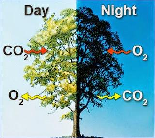Pengertian, Fungsi, Proses Fotosintesis