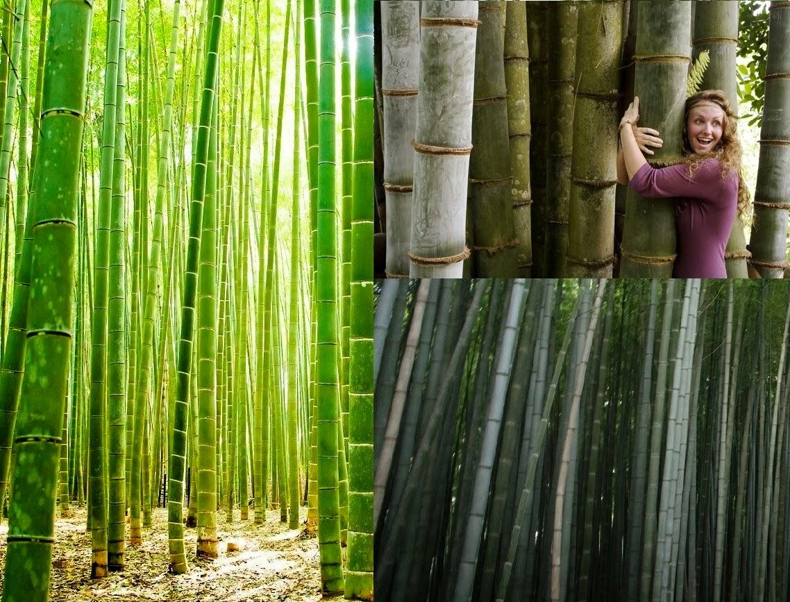 bamboo business