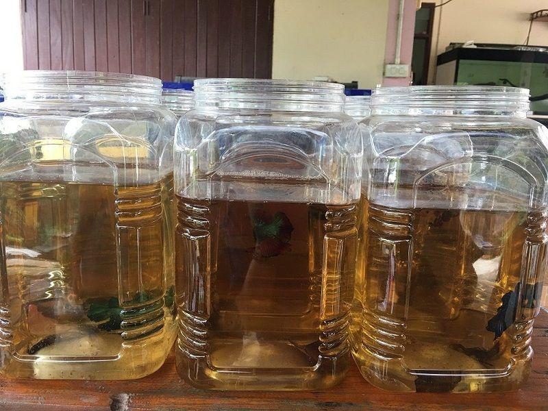 Betta Fish Container