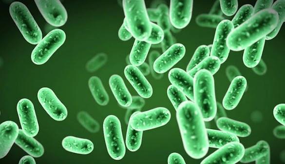 5 Perbedaan Archaebacteria dan Eubacteria Yang Harus Diketahui
