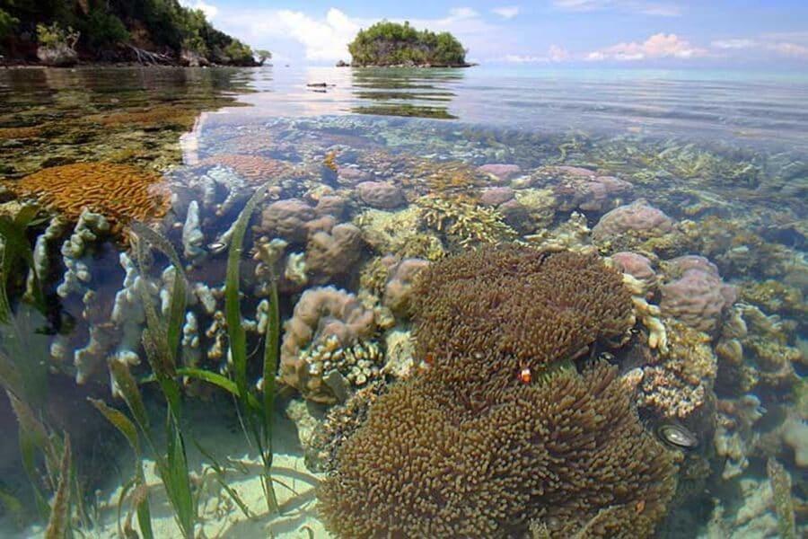 indahnya nggak bisa bohongin hati, inilah Surga Bawah Laut di Indonesia yang Bikin Kagum Dunia!