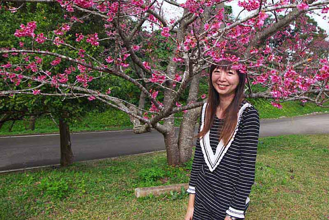 Asian girl posing under a cherry tree, in bloom