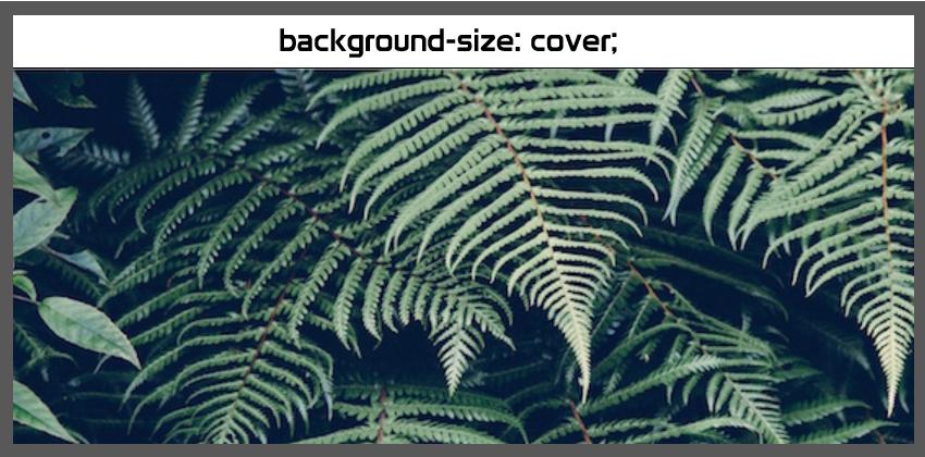 Background con imagen de fondo sin repetir