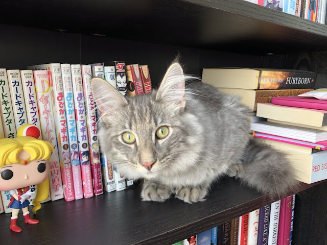 a tabby cat sitting on a bookcase