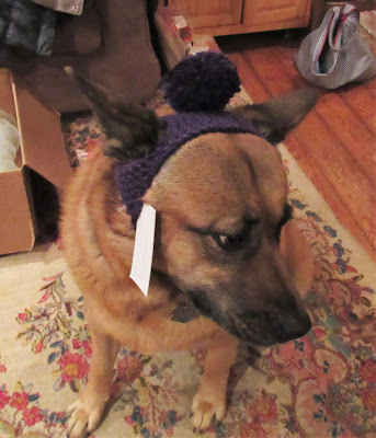 knitted hat for dogs for sale at https://www.etsy.com/shop/JeannieGrayKnits