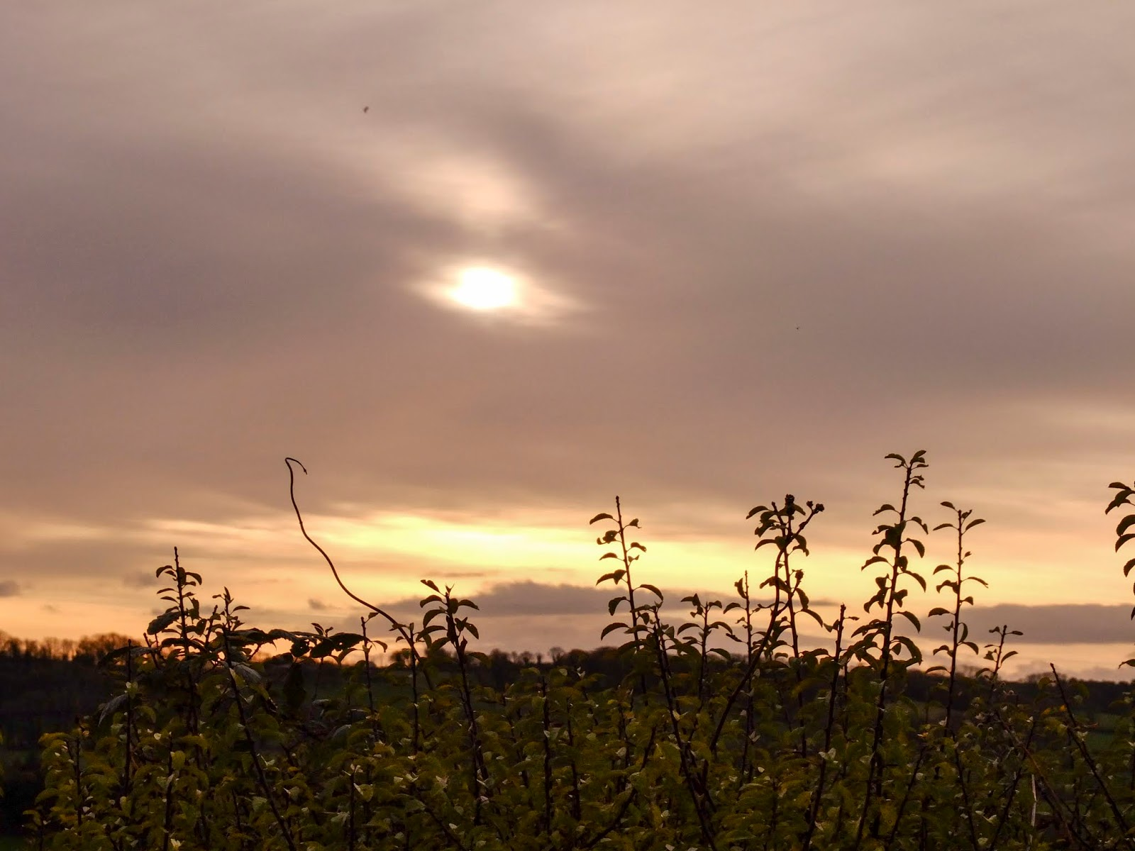 Sun behind the clouds at sunset over the hedge in County Cork.