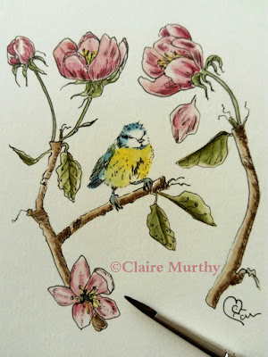 Bluetit and blossom watercolour illustration bird paintings