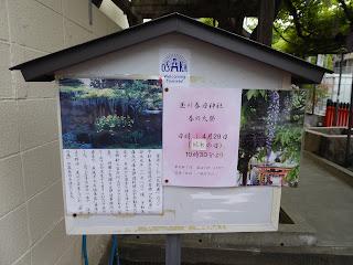 春日神社の藤(のだふじ発祥の地)「天赦園から里帰りした藤」説明