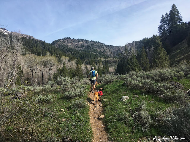 Hiking to the Jardine Juniper Tree, Logan Canyon