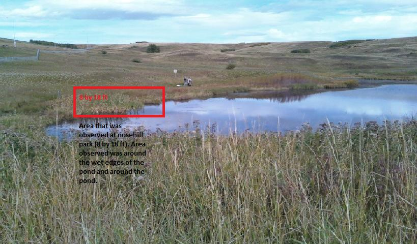 swc nose hill ecology effects of abiotic factors on biotic factors