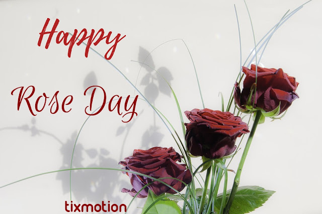 3d Golu Name Wallpaper Happy Rose Day Free Images Royalty Free Roses