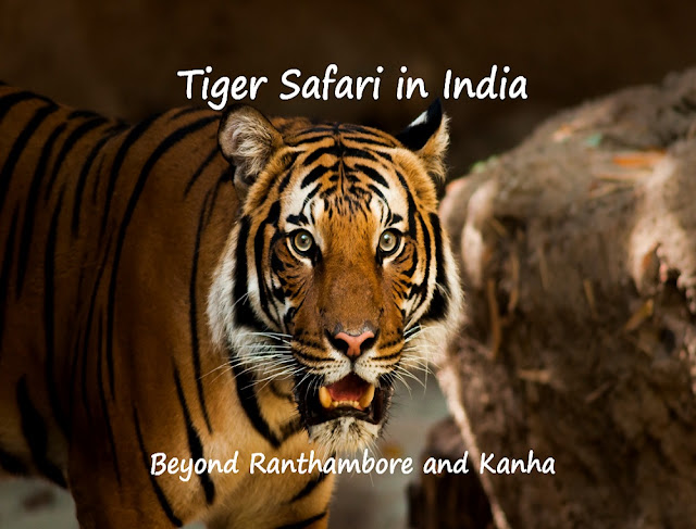 tiger safari in india