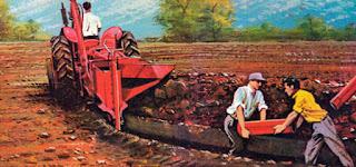 Toprağın Drenajı Nedir? Nasıl Yapılır?