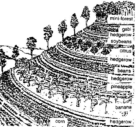 Naturalism the eighth sense non cash farming technology for Terrace farming definition