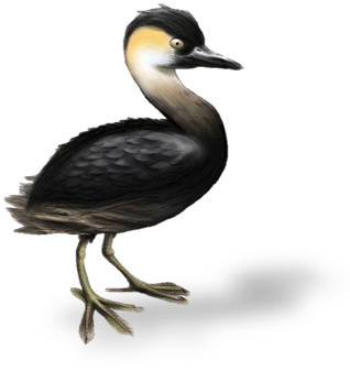 Illustration of the extinct Madagascar Red-necked Grebe bird, also called Alaotra Grebe — original image (without drop shadow) from DinoAnimals.pl