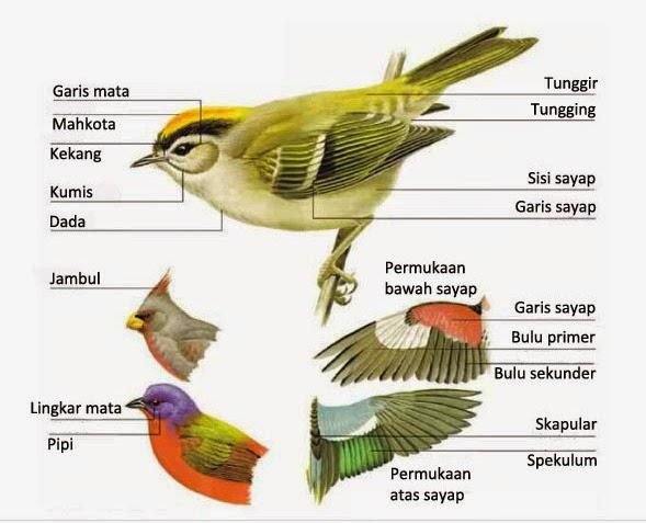 bagian-bagian tubuh burung