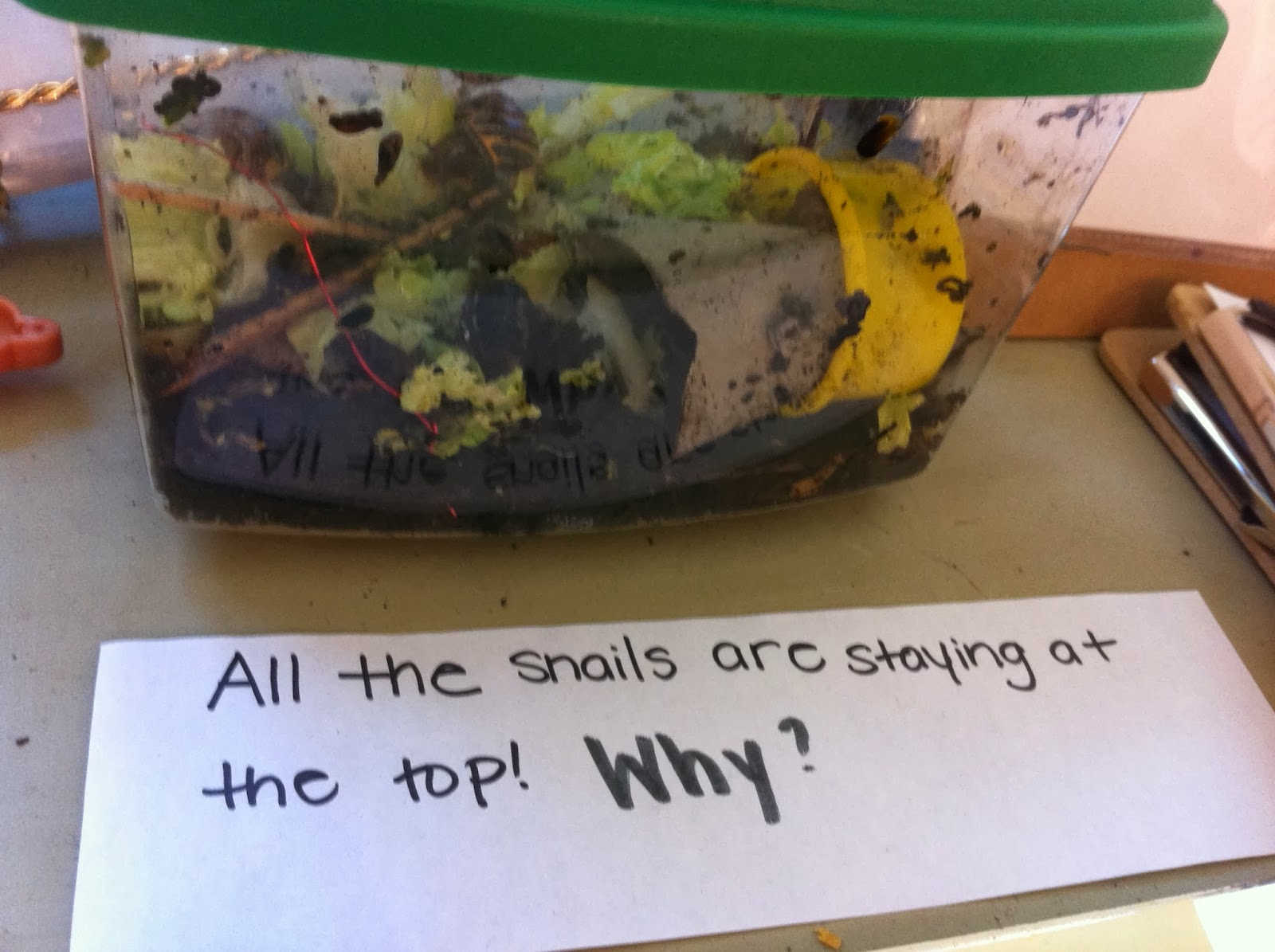 Transforming Our Learning Environment Into A Space Of Possibilities A Home For Snails Tbt