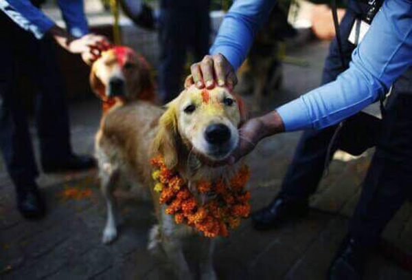 Annual Nepali Festival Thanks Dogs For Being The Best Friends Of Mankind