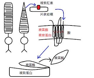 踏實/積極/持續學習: 2013.09.17 知覺心理學 (二) The Beginnings of Perception
