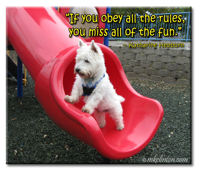 """If you obey all the rules, you miss all of the fun."" meme"