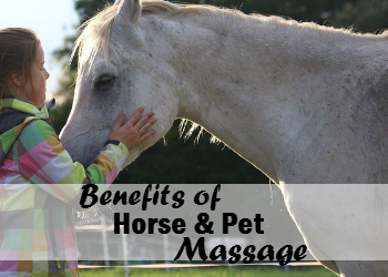 Benefits of Horse & Pet Massage