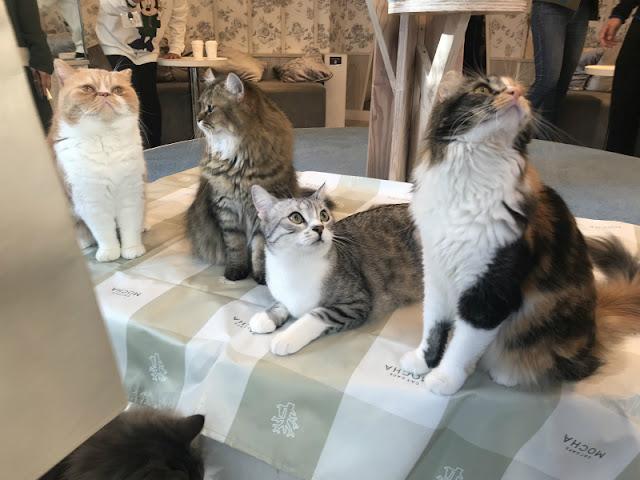 MOCHAにいる猫ちゃんです。