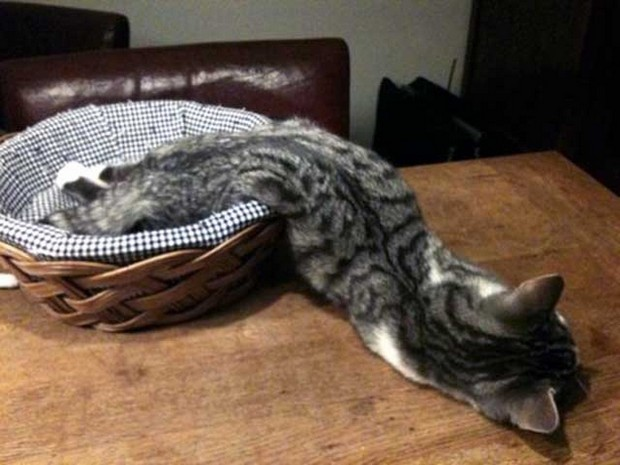 cats are liquids 4