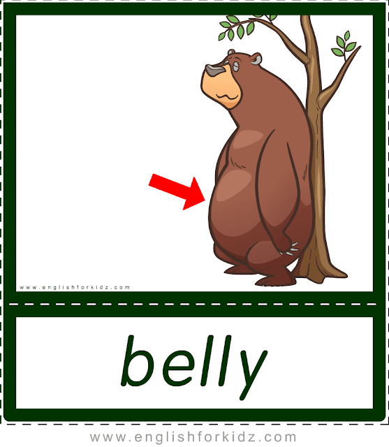 Belly (bear) - printable animal body parts flashcards for English learners
