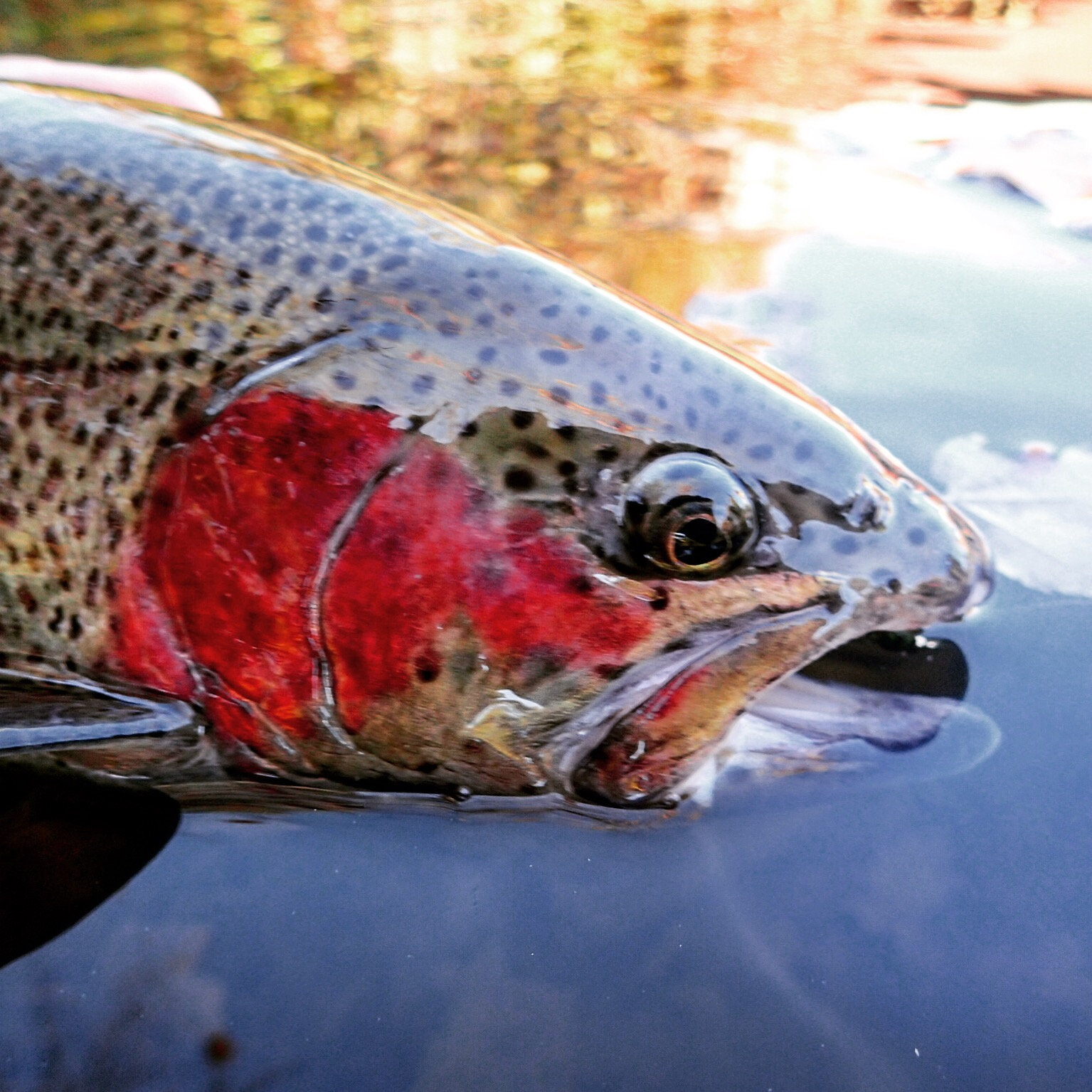 Beautiful fall weekend for fishing | BlogFlyFish.com