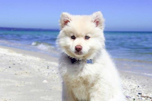 Dog Standing on Beach HD Wallpaper