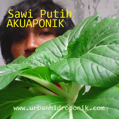 sayur sehat organik akuaponik, contoh instalasi akuaponik