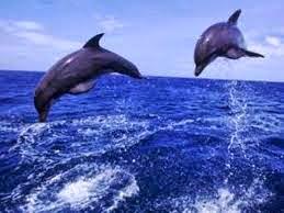 Gerak Hewan di Dalam Air