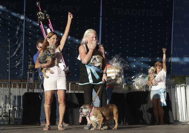 English bulldog scoops $1500 prize money after winning World