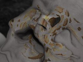 蛇(素材使用)