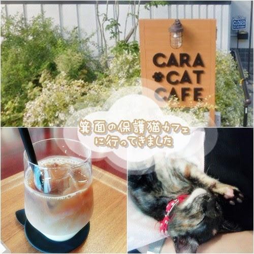 箕面の保護猫カフェCara Cat Cafeで里猫たちとまったり。