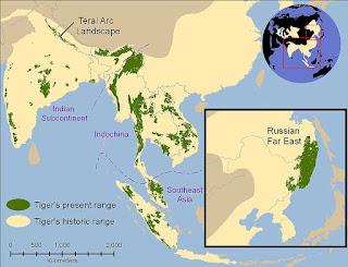 penyebaran harimau sampai ke indonesia