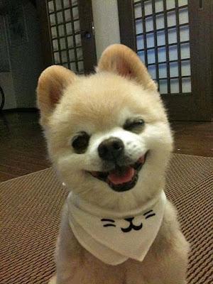 süßer kleine Hundeblick - Welpe mit Schal