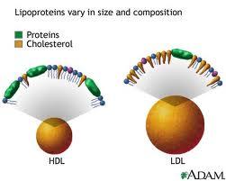 Turunkan LDL & Naikkan HDL