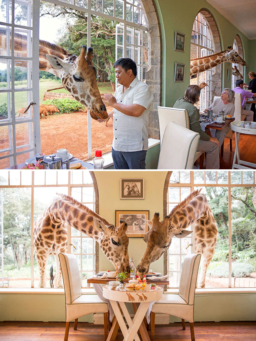 35 Of The World's Most Amazing Restaurants To Eat In Before You Die - Share Breakfast With A Giraffe, Giraffe Manor, Langata, Kenya