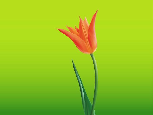 Lale, Çiçek Vektör Çizim