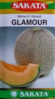 Melon Glamour murah, perawatan mudah, rasa manis, daging keras, kulit bernet, Glamour, Melon Glamour, Melon Orange, Melon Daging Merah, Sakata Seed, Benih, Bibit, Tanaman, Budidaya, Harga murah, Petani