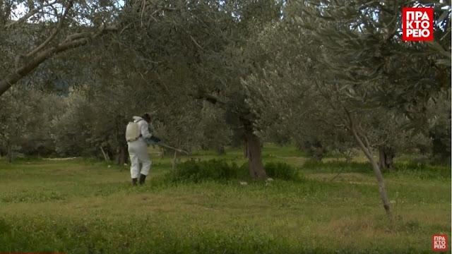 Glyphosate: Το ζιζανιοκτόνο που διχάζει την Ευρώπη χρησιμοποιείται ευρέως στην Αργολίδα (βίντεο)
