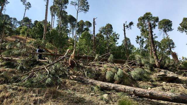 """Pakistán planea demandar a la India ante la ONU por """"terrorismo ecológico"""" tras el bombardeo de una reserva forestal"""