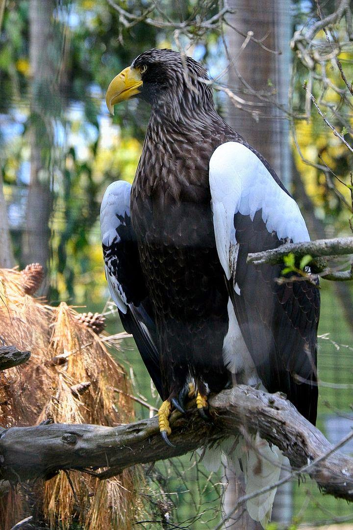 10 of the World's Most Famous Zoos - San Diego Zoo, California, USA